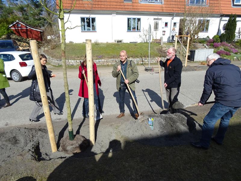 Klimabaum-Pflanzung in Kiel im EIP-Projekt, von rechts: Peter Todeskino (Bürgermeister Stadt Kiel), Winfried Jöhnk (Vors. Ortsbeirat Russee/Hammer/Demühlen), Dr. Andreas Wrede (Landwirtschaftskammer S-H), Petra Holtappel (Grünflächenamt Stadt Kiel)