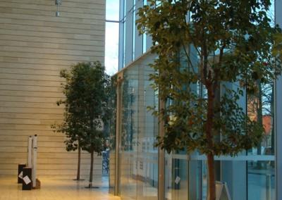 Kampferbäume in der Bezirksregierung Münster