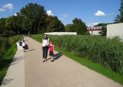 IGS-2013-Hamburg,-Naturwelten,-Schilf-Flächenpflanzung