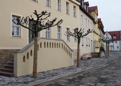 Kandelaberlinden am Rathausplatz Bad Lauchstädt